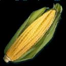 ARKトウモロコシ